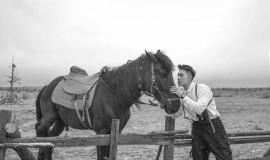 草原上的帅哥和马